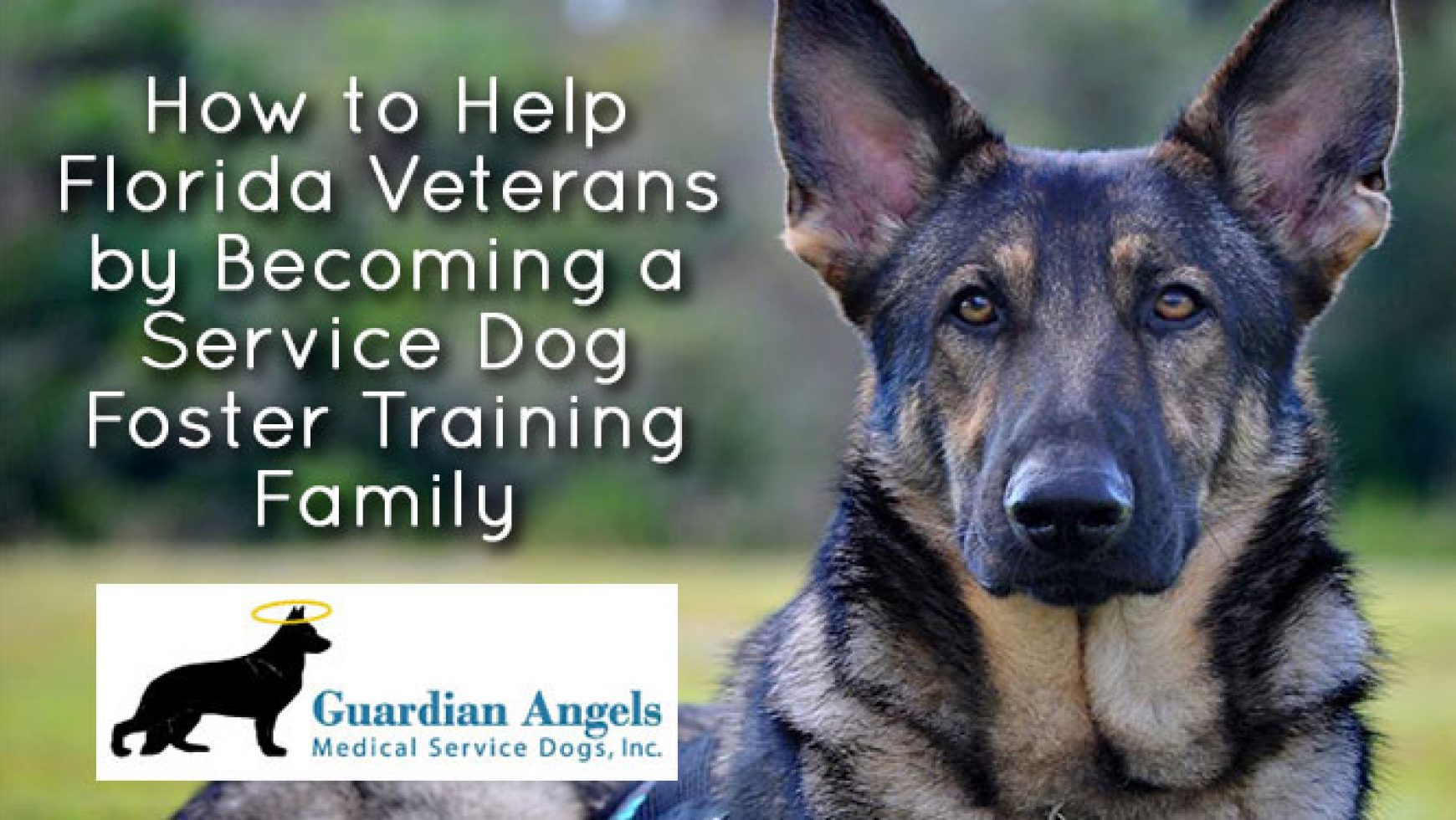 How to Help Florida Veterans by Becoming a Service Dog Foster Training Family